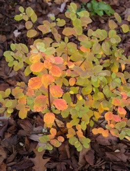 what makes leaves change color what makes leaves change color real gardens grow natives