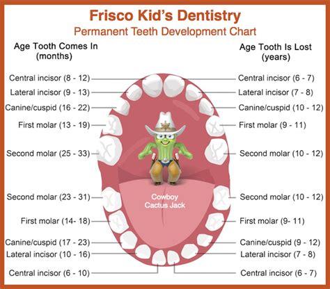 dental chart permanent tooth development chart