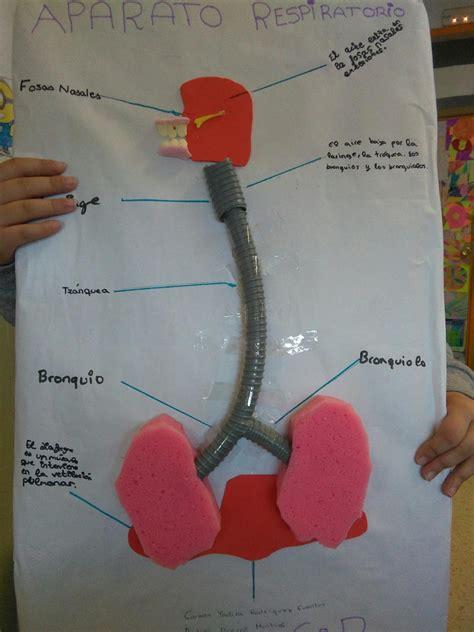 como hacer una maqueta del sistema respiratorio el diario de la clase tema 2 aparato respiratorio