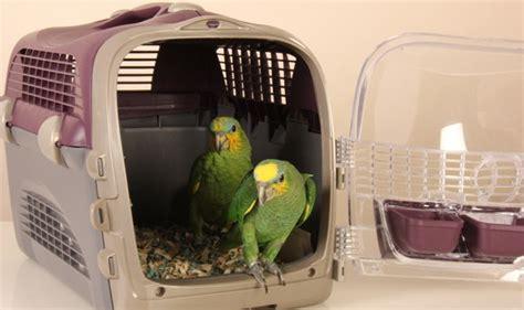 choosing the right bird travel carrier hari