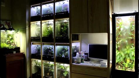 frog room to 14 dart frog tanks