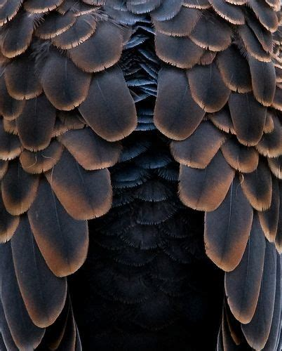 pattern texture organic 994 best textures inspiration images on pinterest
