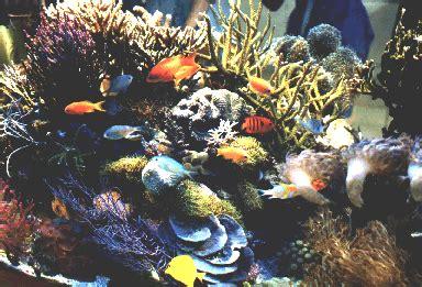 Lugol J Reef By Javareef2 r 201 cif l aquariophilie marine et r 233 cifale 224 la