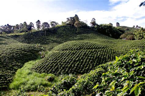 la zona cafetera colombia eje cafetero wikipedia la enciclopedia libre