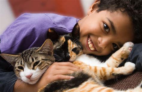 imagenes de niños jugando al gato y al raton las razas de gatos m 225 s recomendadas para ni 241 os mascotalia