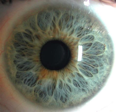 hd eye pattern the eyes have it the iris pictured in remarkable detail