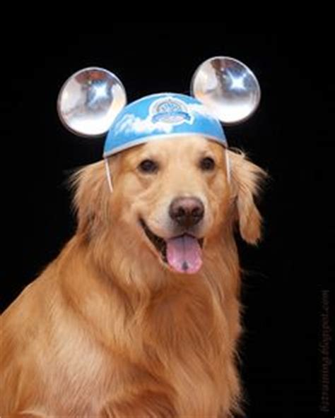 golden retriever ears 1000 images about dogs in hats on golden retrievers animals and