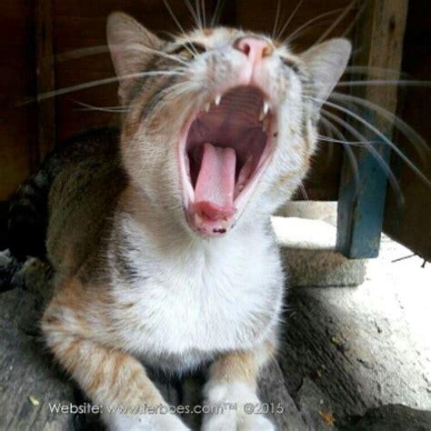 film lucu kucing kucing ini tangnya ngeselin banget ferboes com