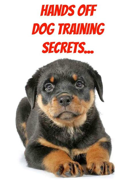 rottweiler obedience classes 341 best images about rottweilers on
