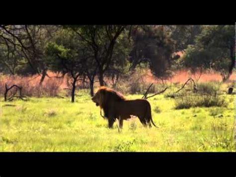 white lion film youtube white lion movie part 6 youtube