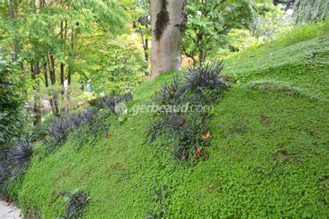 Supérieur Plantes Pour Talus Pentu #1: talus-pente-couvre-sol.jpg