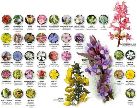imagenes de flores de bach flores de bach introducci 243 n