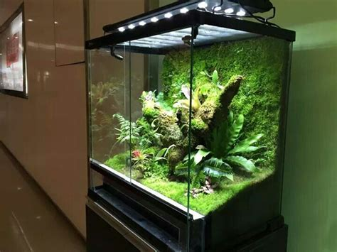 Aquascaping Inspiration 17 Best Images About Terrarium Inspiration The Green