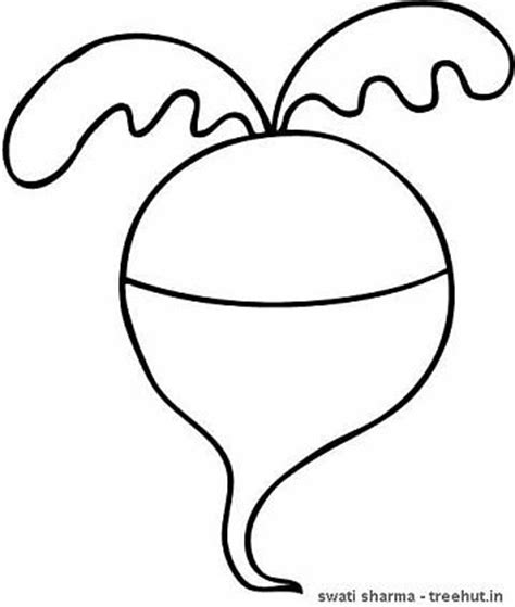 turnip clipart clipart suggest