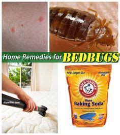 rid  bed bugs    bugs insects rodents pests pinterest bed bugs