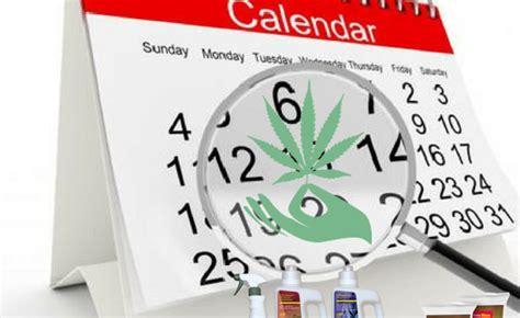 plantar marihuana en interior 191 cuando plantar marihuana de exterior en espa 241 a