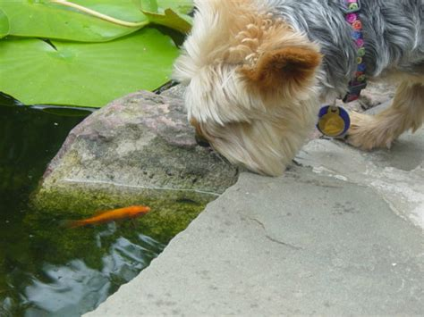 pets you can find in your backyard how to dog proof your yard 6 things you should do right