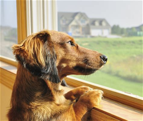 dogs separation anxiety alleviate your s separation anxiety