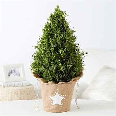 home depot christmas tree delivery buy plants plant delivery starting at 19 99