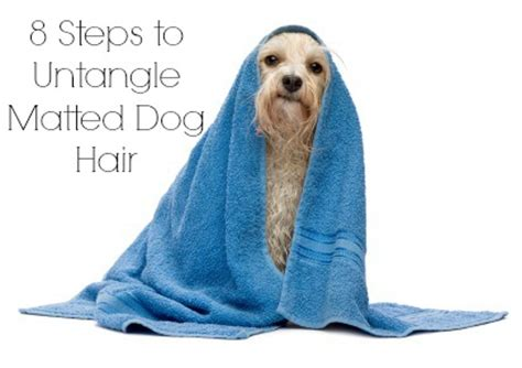 8 steps to untangle matted hair cowboy magic