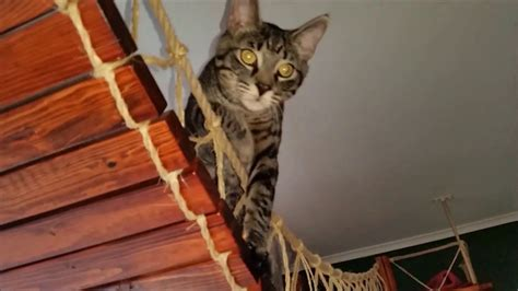 how to do a cat how to build a hang bridge for cats