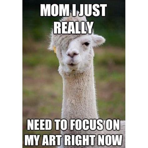 Funny Llama Memes - 21 funny llama memes if you don t need no drama