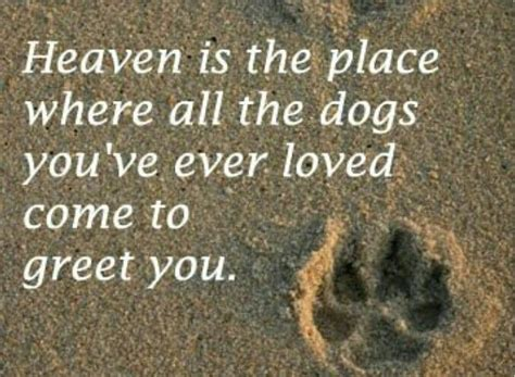 all dogs go to heaven quotes all dogs go to heaven quotes www imgkid the image kid has it