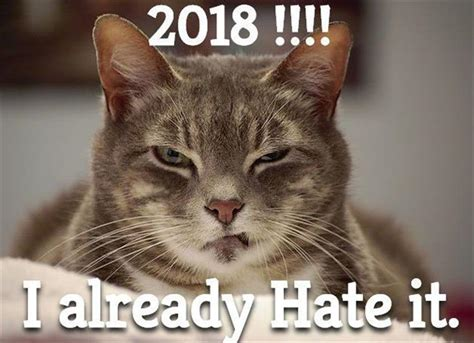 new year 2018 animal tiger animal picture dump of the day 26 pics