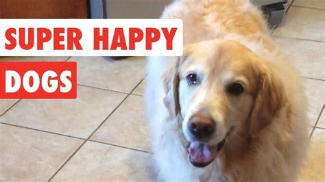 super funny  super happy dogs funny dog video compilation   laugh love