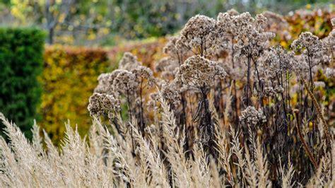 walled garden bristol jason ingram photography portfolio of gardens
