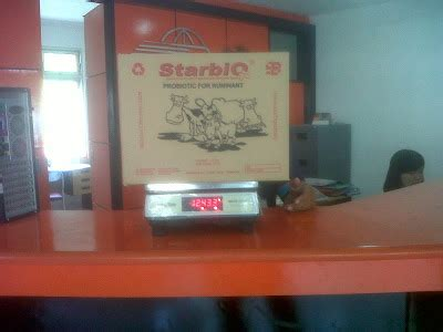 Starbio Untuk Ternak Sapi fermentasi jerami suranto giyat
