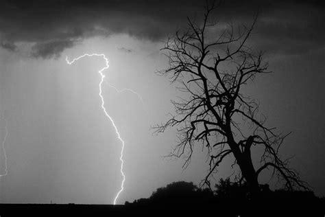 black white silhouette photography lightning tree silhouette black and white photograph by