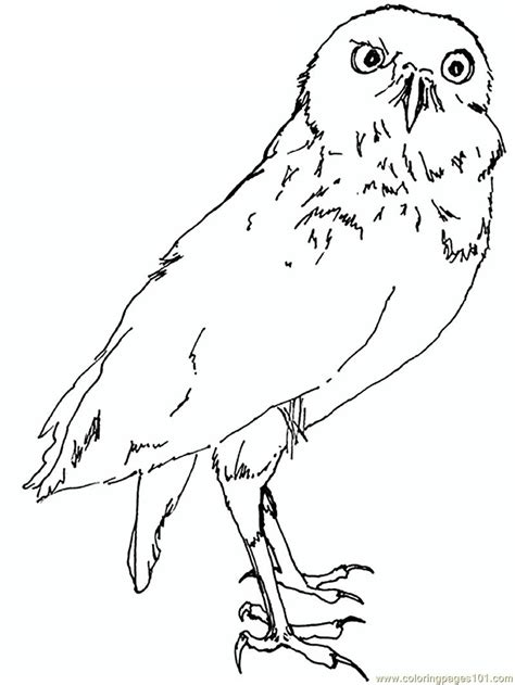 Snowy Owl Face Coloring Pages Snow Owl Coloring