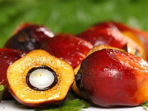 Minyak Kelapa Curah kelapa sawit cpo dan pks tentang kelapa sawit dan sejarah nya
