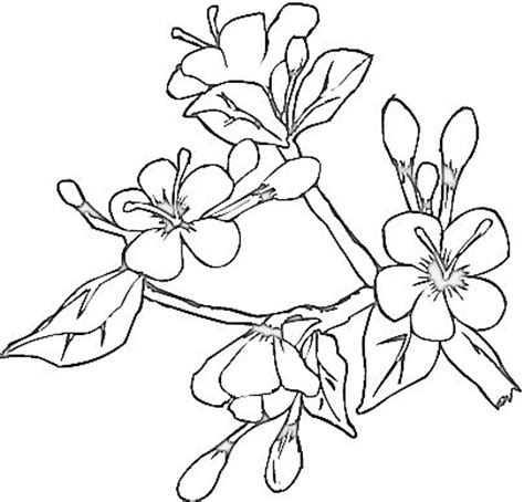 coloring pages japanese flowers butterfly coloring sheets blooming flowers coloring page