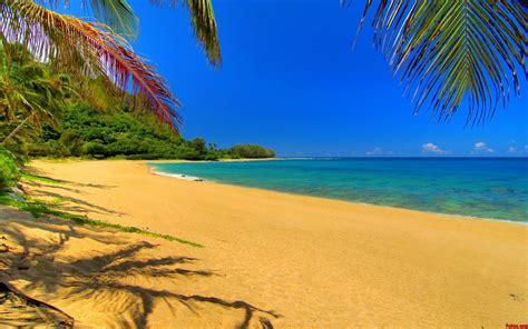 fondo pantalla playas taringa 1024x600 playa tropical mar palmeras fondos de pantalla gratis