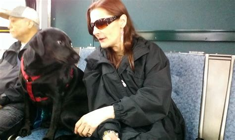dogs eclipse black labrador rides to the park by herself weekly