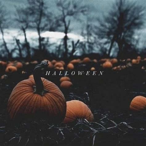 imagenes halloween tumblr halloween pumpkin patch pictures photos and images for
