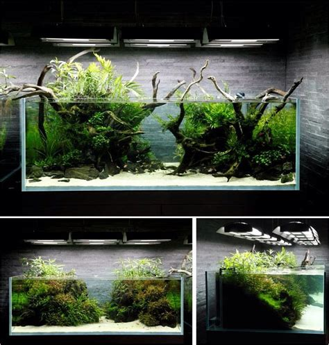 aquascape freshwater aquarium 31 best images about aquascape biotope inspiration on