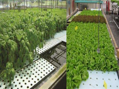 Pot Kantong Tanaman Sayuran 30 Liter 09 hidroponik