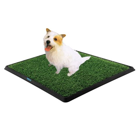 dog house training pads how to get rid of dog urine smell in house from carpet