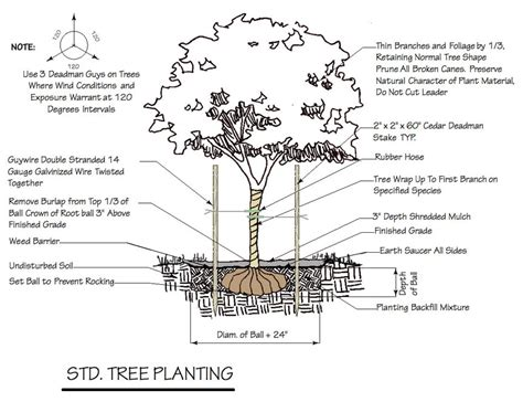 Construction Plan Symbols by Tree Tips Tuesday Garden Walk Garden Talk