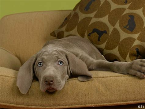 dog on couch how to make your home more pet friendly diy