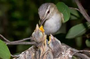 easy way a blog for children quot how does a baby bird
