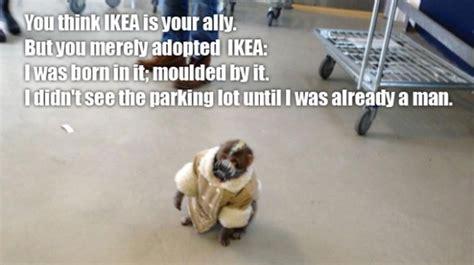 ikea monkey meme