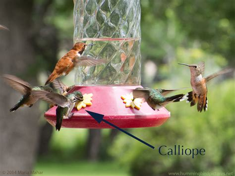 best 28 how do i get hummingbirds to come to my feeder
