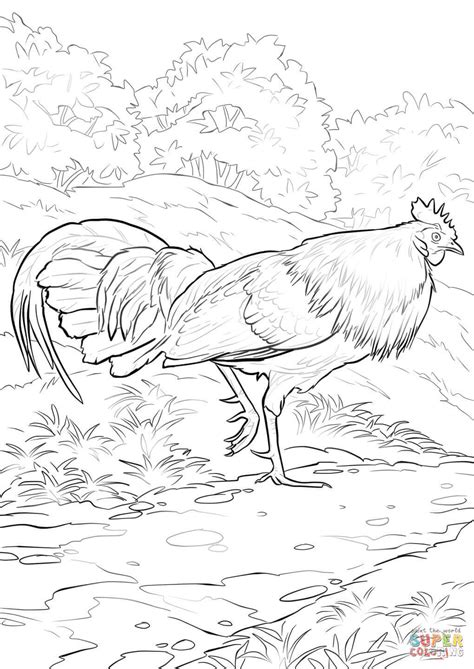 portuguese rooster coloring page related coloring pages