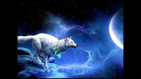 mucche volanti mein krafttier wolf