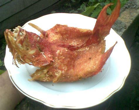 Minyak Goreng Ikan Kerapu resep ikan kerapu terbang saus kari asam manis ala dentist chef dentist chef