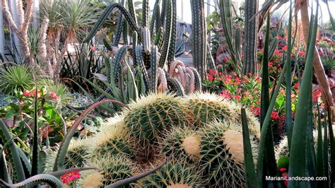 what does succulent mean in the garden with mariani what does succulent mean in the garden with mariani